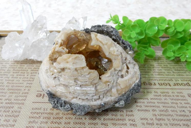 貝の化石のカルサイト-0