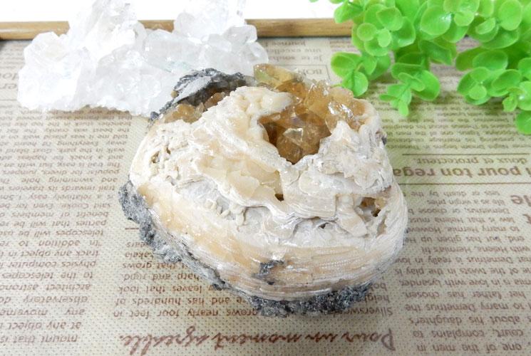貝の化石のカルサイト-3