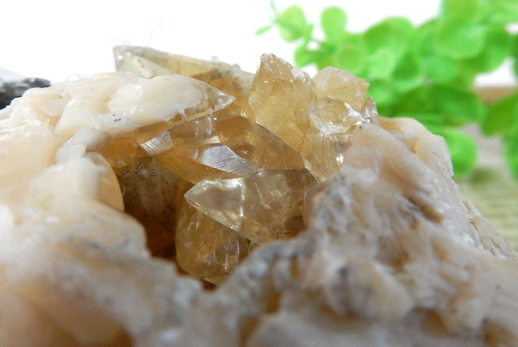 貝の化石のカルサイト-4