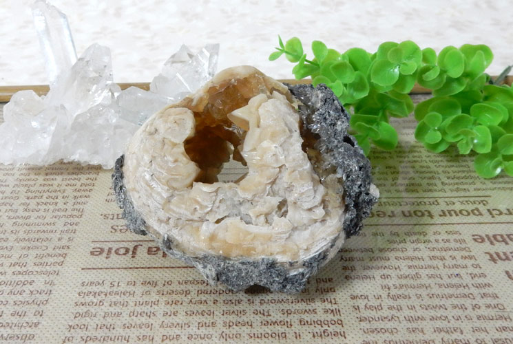 貝の化石のカルサイト